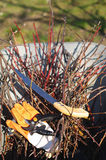 Branches and garden tools Stock Image