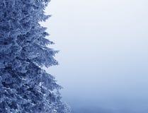 Branches gelées d'arbre impeccable en forêt et ciel neigeux d'hiver dedans photographie stock
