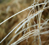 Branches gelées d'usine couvertes de la glace Photo libre de droits