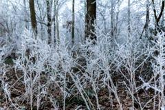 Branches gelées dans la forêt Photographie stock libre de droits