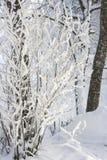 Branches gelées dans une campagne scandinave photographie stock libre de droits