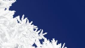 Branches givrées de sapin sur un fond bleu-foncé Images stock