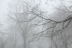 Branches givrées en brouillard Photos libres de droits