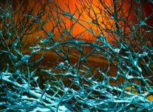 Branches givrées pendant la nuit photos libres de droits