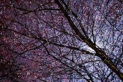 Branches glacées après tempête de neige photographie stock libre de droits