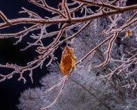 Branches glacées d'un arbre et d'un lisite sec couverts de croûte de glace image libre de droits