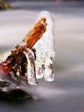 Branches glaciales au-dessus de courant de refroidissement Réflexions en glaçons Photos stock