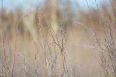 Branches glaciales et buissons congelés, fond étonnant d'hiver Photos libres de droits