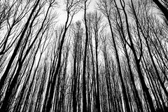 Branches gradient in winter forest Royalty Free Stock Images
