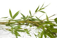 Branches and green and fresh bamboo leaves reflected on mirror and water with white background royalty free stock photography