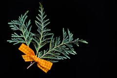 Branches of green juniper with a yellow ribbon of fabric on a black  background. Branches of green juniper with a yellow ribbon of fabric on a black abstract Royalty Free Stock Image