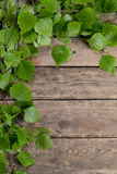 Branches with Green Leaves Stock Image