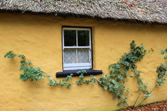 Branches with green leaves creeping along thatched cottage Royalty Free Stock Photo