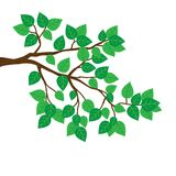 Branches, green leaves. Royalty Free Stock Photos