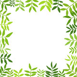 Branches with green leaves. Royalty Free Stock Photography
