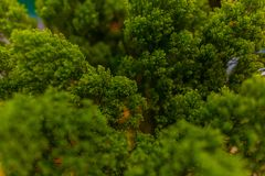 Branches of green vegetation. Branches of green vegetation for a bouquet, decorations Stock Images