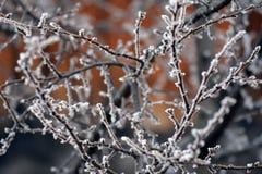 Branches grises en gelée Image stock