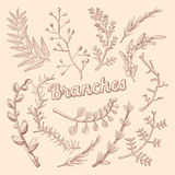 Branches Hand Drawn Floral Doodle. Rustic Plants Royalty Free Stock Photos