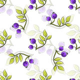 Branches. Hand drawn pattern made from branches with berries on the white background Stock Images