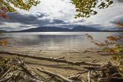 Branches hanging over driftwood on shore of Flagstaff Lake. Stock Image