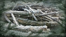 Branches with hoar-frost Royalty Free Stock Photos