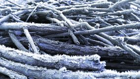 Branches with hoar-frost Royalty Free Stock Image
