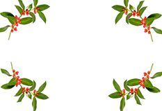 Branches of holly berry Royalty Free Stock Photos