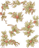 Branches of holly Royalty Free Stock Photos