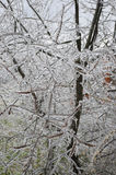 branches icy Royaltyfri Foto