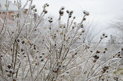 branches icy Royaltyfri Bild
