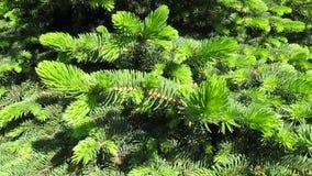 Branches impeccables dans le vent clips vidéos