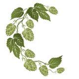 Branches incurvées par illustration avec des cônes des houblon illustration stock