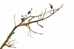 Branches isolated Royalty Free Stock Photo