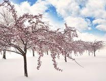 branches istrees Royaltyfri Fotografi