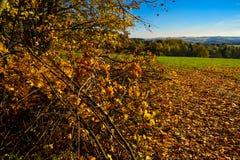 Branches jaunes photographie stock libre de droits