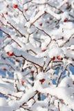 branches julen Arkivfoto
