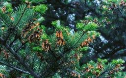 branches kottegran Arkivfoto