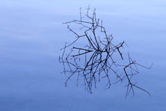 Branches in the lake Royalty Free Stock Photo