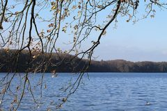Branches and Lake. There are branches with dry leaves. This is a Pond in Autumn Royalty Free Stock Photos
