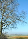 Branches of a large oak tree Royalty Free Stock Photos