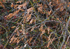 Branches at late autumn. Royalty Free Stock Photos