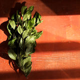 Branches of laurel bay leaves on red Stock Photos