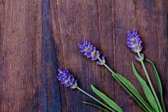 Branches of a lavender Stock Photos