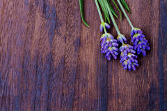Branches of a lavender Stock Photography