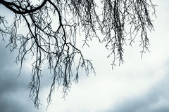 Branches of leafless bare tree. Over cloudy sky. Monochrome natural background photo with blue vintage tonal correction filter effect stock images