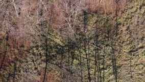 Leafless trees from above in winter stock video footage