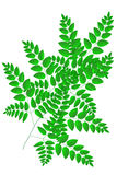 Branches of Leaves 2 Royalty Free Stock Photos