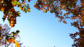 Branches With Leaves In Autumn Colours On Blue Sky. This shot was made at the forest at sunset and consists of the blue sky and branches of trees in muted autumn stock footage