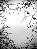 Branches without leaves Stock Photography