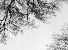 Branches without leaves Stock Photos